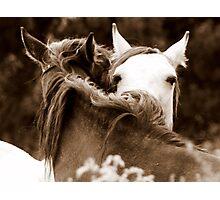 Connemara Ponies Photographic Print