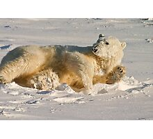 Hello. Care for a roll in the snow? Photographic Print