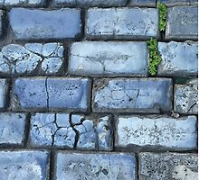 Blue cobblestones by TereArzola