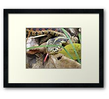 Last Bit Of Attitude For This Year Framed Print