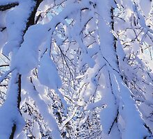 Snow covered branches 2 by intensivelight