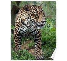 Athena the Jaguar Poster