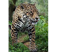Athena the Jaguar Photographic Print