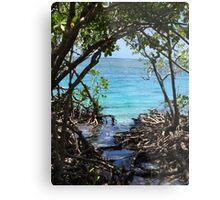 Caribbean mangroves Metal Print