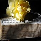 Peaceful Reading by Rozalia Toth