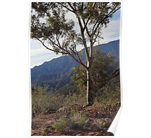 Flinders Ranges - a place of beauty Poster