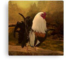 Rooster at Hanauma Bay Canvas Print