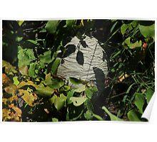 Hornet Nest in Trees Poster