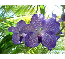 Blue orchid Photographic Print