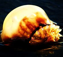 Jelly on the Beach by Paulette1021