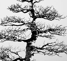 Bare Bonsai by Eric G Brown