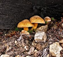 Mushrooms Hiding Under A Log by OneRudeDawg