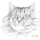 Cal - Maine Coon Cat by Kate Eller