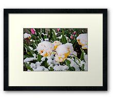 Canadian Springtime  Framed Print