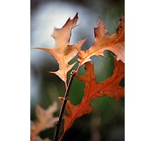 Late Fall Trio Photographic Print