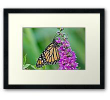 Monarch Butterfly - 37 Framed Print