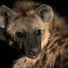 Hyena up close and personal by jozi1