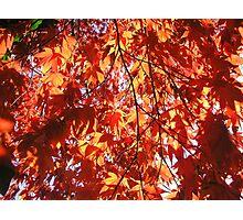 Crimson and Gold Photographic Print