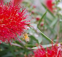 Bottle Brush and Bee by Gregory John O'Flaherty