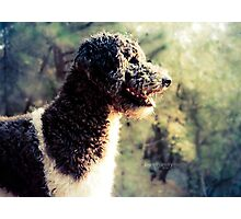 The Family Dog Photographic Print