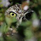 Sneak Peek by Virginia N. Fred
