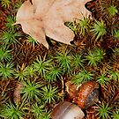 Forest Floor by CMCetra