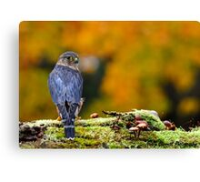 Merlin Canvas Print