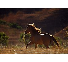 Sulphur Springs Mare Photographic Print