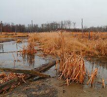 Elk Island marshlands by zumi
