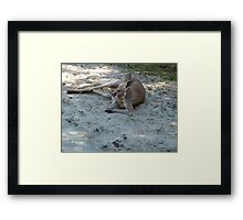 Having A Lazy Afternoon Framed Print
