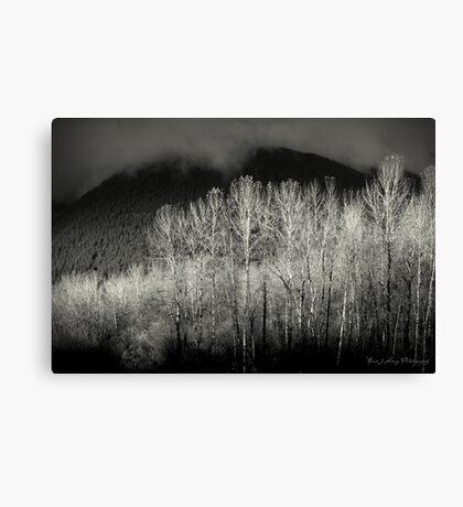 Arbres en noir Canvas Print
