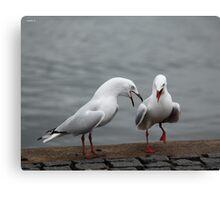 Seagull Dance Canvas Print