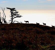 Tule Elks of Tomales Bay by Wing Tong