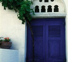 Grape Vine and Blue Shutters by Christina Backus