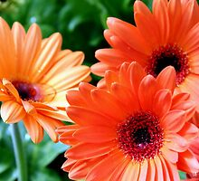 Orange You Glad It's Spring by Betty Northcutt