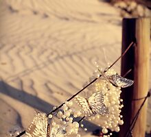 Three Little Beach Butterflies by CarlyMarie