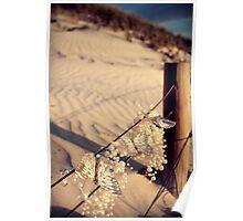 Three Little Beach Butterflies Poster