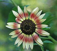 Sunflower821 by Eileen McVey