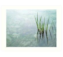 """reeds""  Art Print"