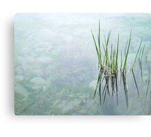"""""""reeds""""  Metal Print"""