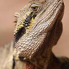 Eastern Water Dragon by Steve Bullock