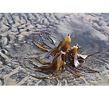 Stranded At Low Tide-Lyme Dorset uk Photographic Print