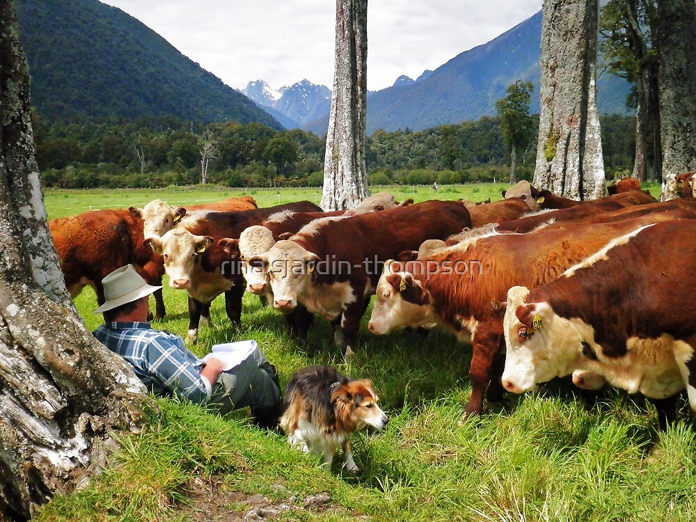 """""""quality time""""   flagstaff hereford stud, nz by rina  thompson"""