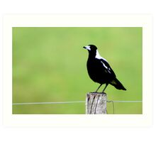 Magpie on fence post Art Print