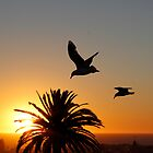 Seagulls at Sunset by Sandra Chung