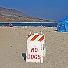 Beach Sign by Chet  King
