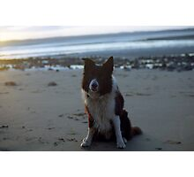 Indy on the beach at twilight Photographic Print