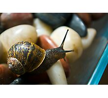 Snail Photographic Print