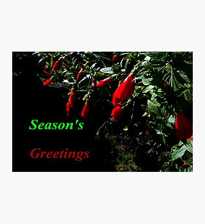 Little red Christmas bells Photographic Print