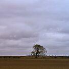 One Tree by Trevor Kersley